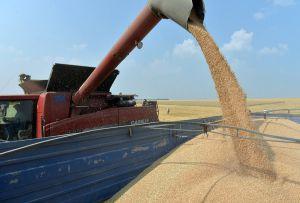 На Львовщине собирают ранние зерновые