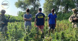 В национальном парке на Херсонщине разбили наркоплантацию