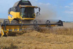 Хмельниччина: Врожайність зернових регулюють грози