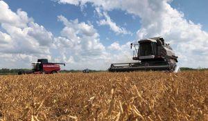 Пшеница порадовала качеством