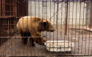 Медведи в хорошие руки