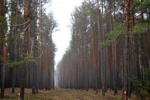 На Житомирщине позаботятся о зеленых легких