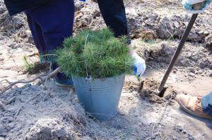 Сумщина: Посаджене дерево — внесок в екологічну безпеку