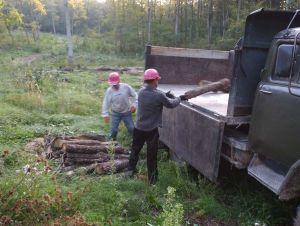 Закарпаття: Наступає холод — дбай про дрова!