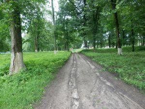 Как меняется графский парк в Линовице