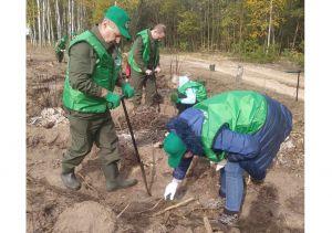 Чернігівщина: Під Любечем буятиме ліс