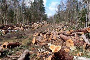 Черкасчина: Под суд за незаконные вырубки