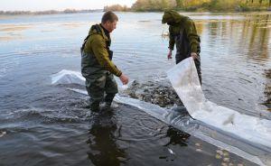 Херсонщина: Днепр заполнили «живым серебром»