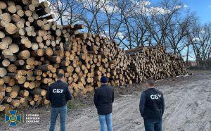 На Черниговщине остановили махинацию с древесиной