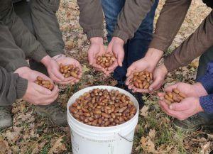 Закарпатье: Семена будут хранить до весны