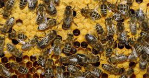 Херсонщина: Одних пчеловодов поддержали, другие — ждут