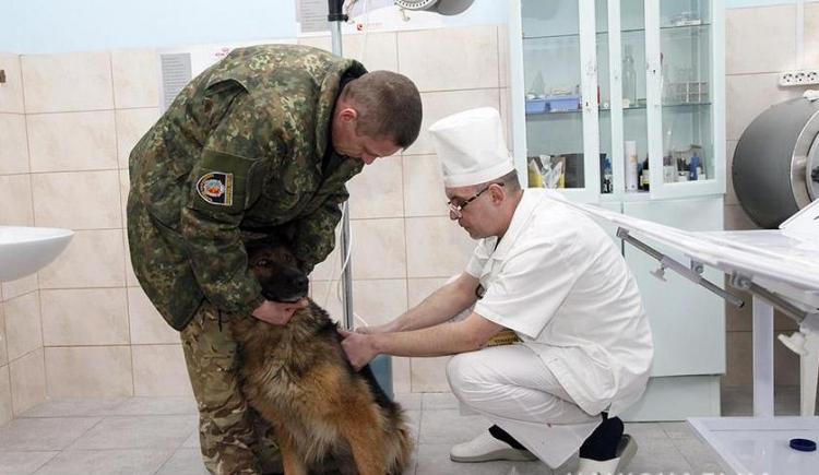 В Хмельницкой области открыли передвижной госпиталь для собак