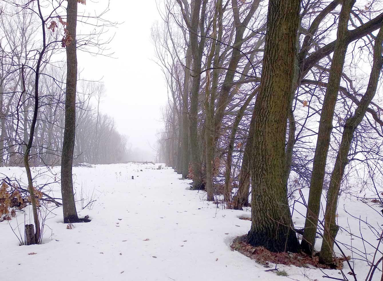 На Кіровоградщині проти «чорних лісорубів» постає громадськість