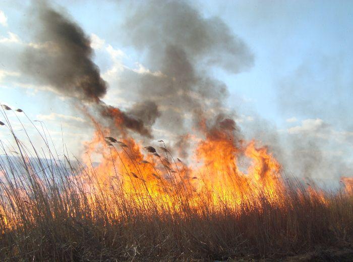 На території Нижньодністровського нацпарку сталася пожежа