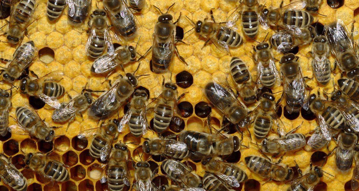 Пасічник змусив заплатити за отруєних бджіл