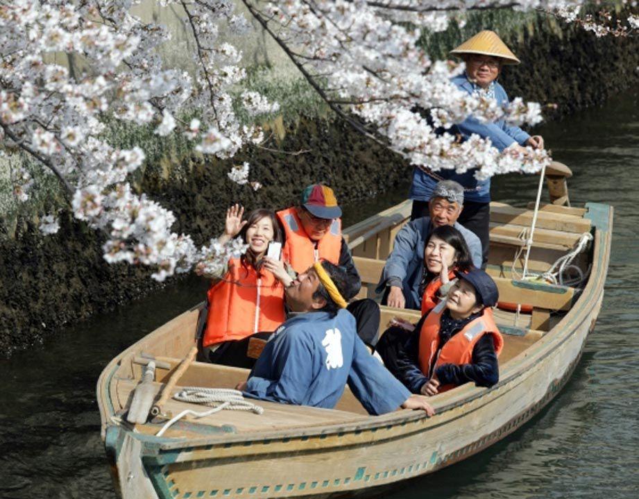 Цветение сакур в Японии — событие национального масштаба