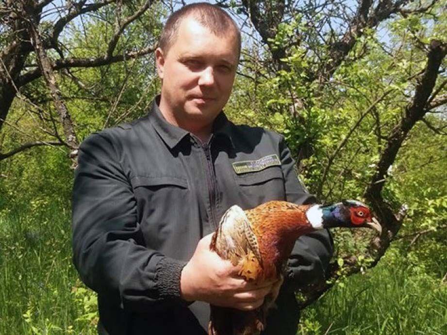 Доброчинці випустили в ліс 80 вирощених ними фазанів