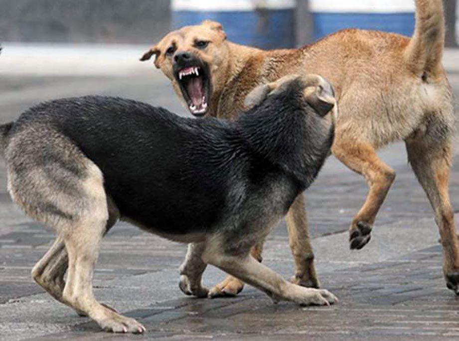 Бездомные собаки атакуют