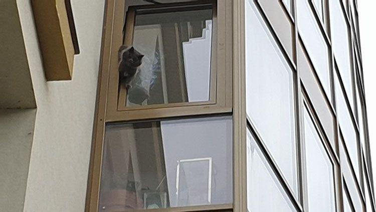 Ужгород. Рятувальники дістали кота, який застряг у вікні