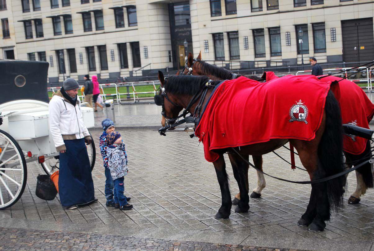 Лошади в жару туристов возить не будут