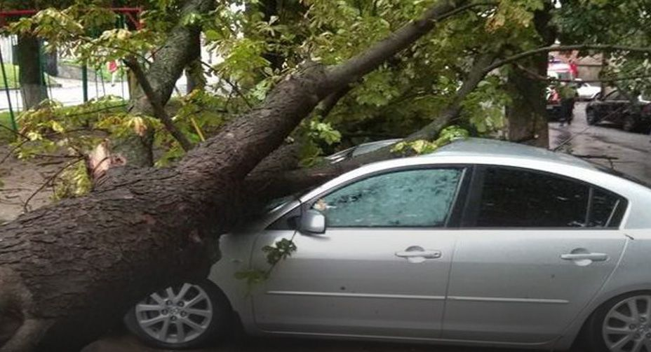 На авто впало дерево — заплатить рада