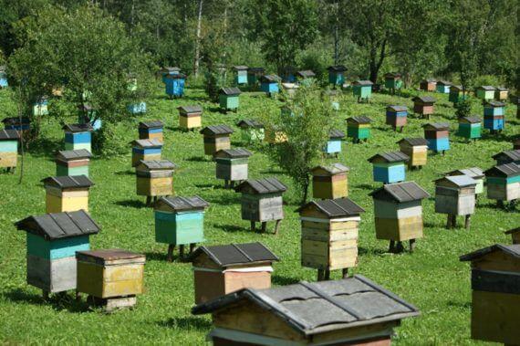 Пасічники не дбають про безпеку бджіл?