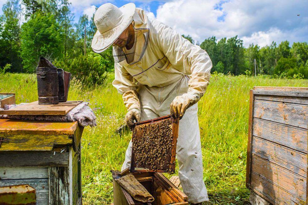 Найвідоміший бджоляр допомагає безробітним
