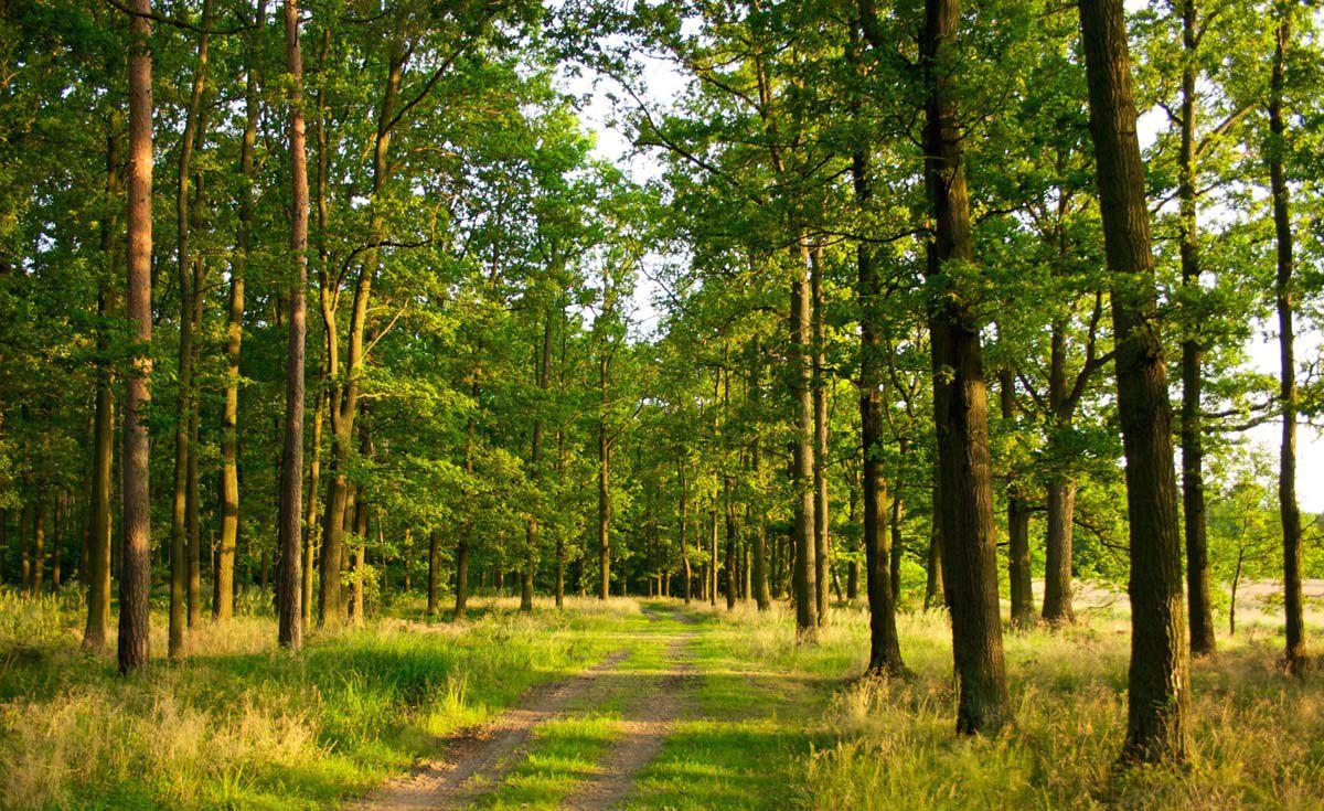 Лісгоспи відтворили 35853 га лісів