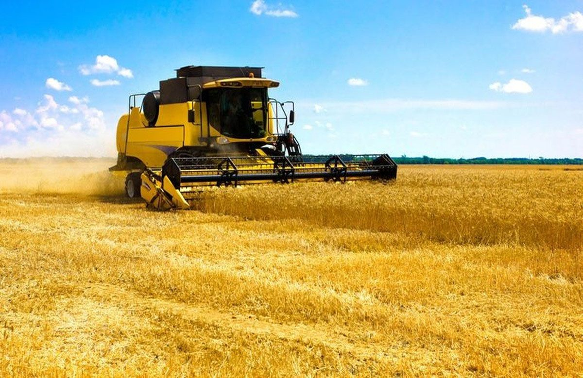 В Запорожской области бьют хлебные рекорды вопреки погодным сложностям