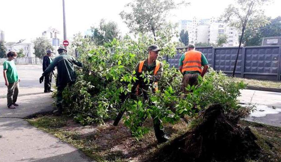 Найбільшої шкоди у Києві завдано зеленим зонам
