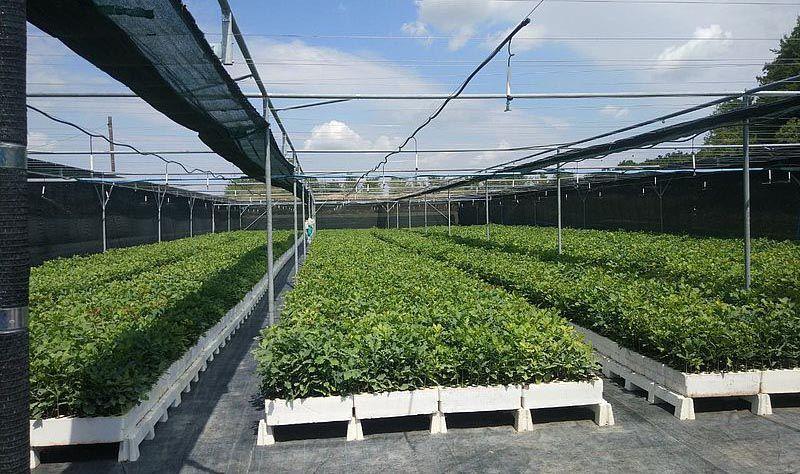 Современные технологии позволяют высаживать растения и летом
