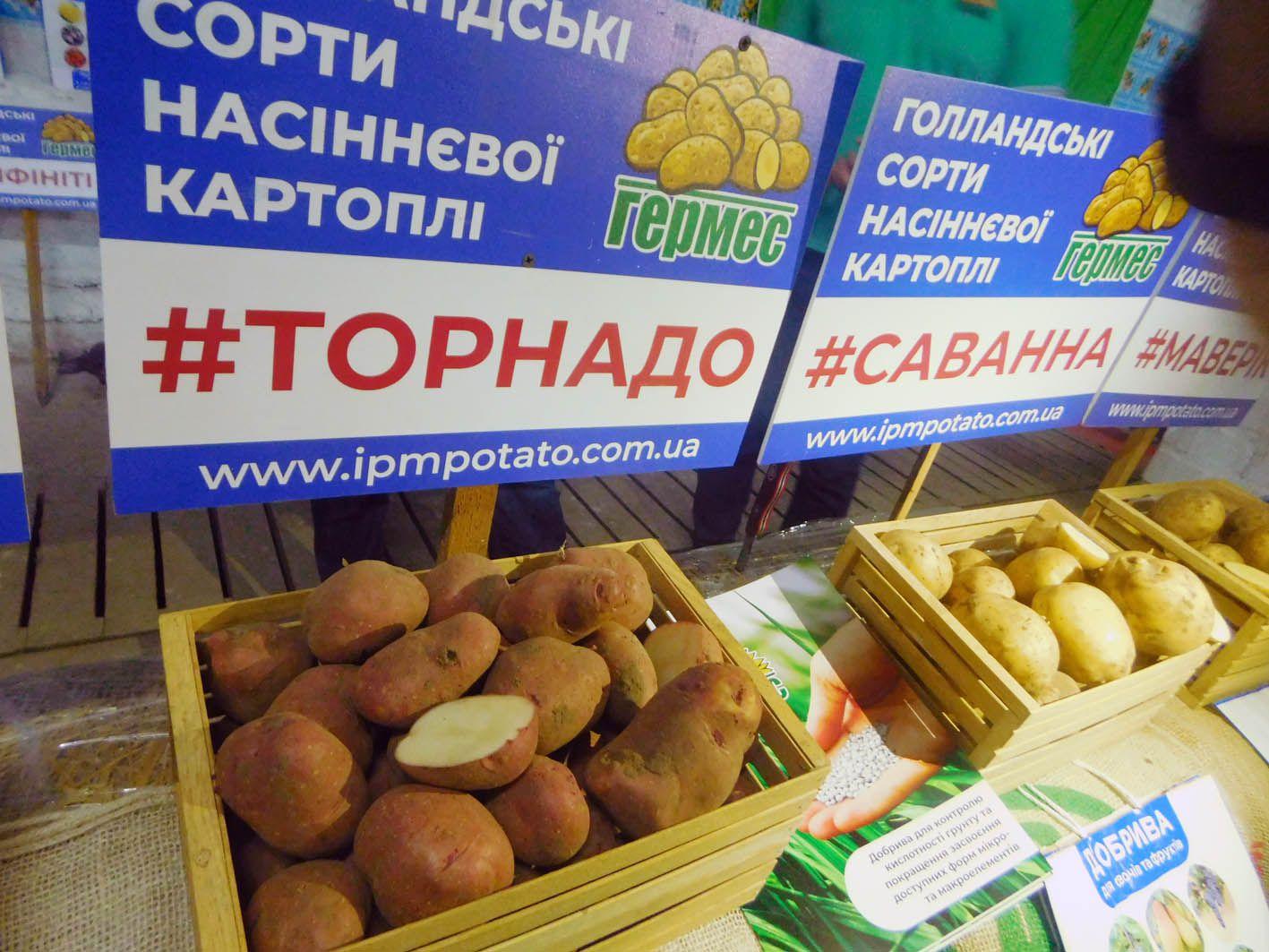 Яловичі — картопляна столиця Рівненщини