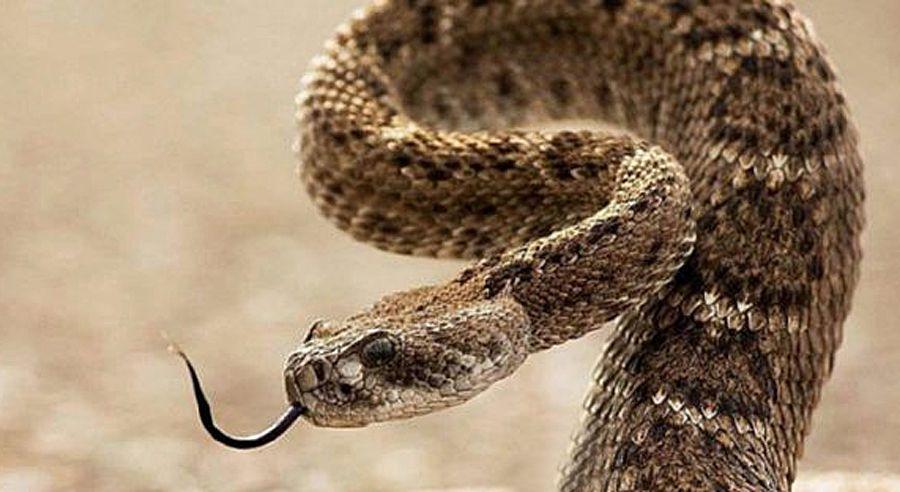Перлину біля моря атакують змії