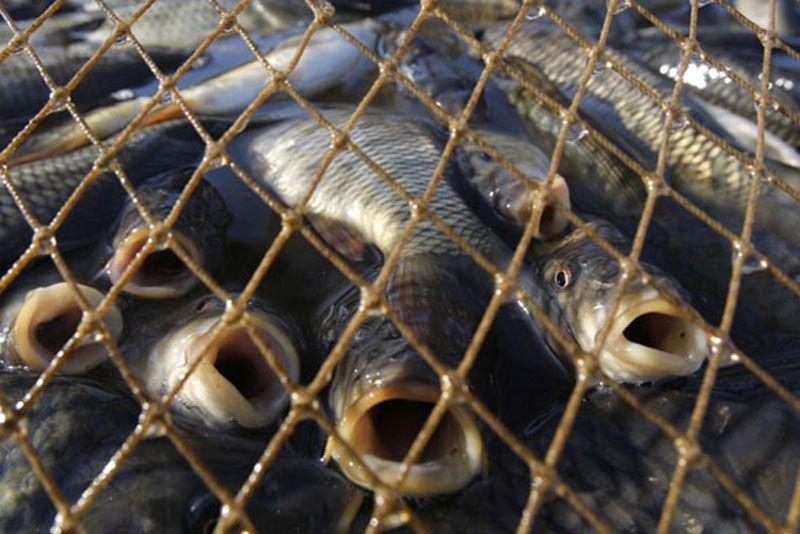 На реке Мукша задержали браконьера