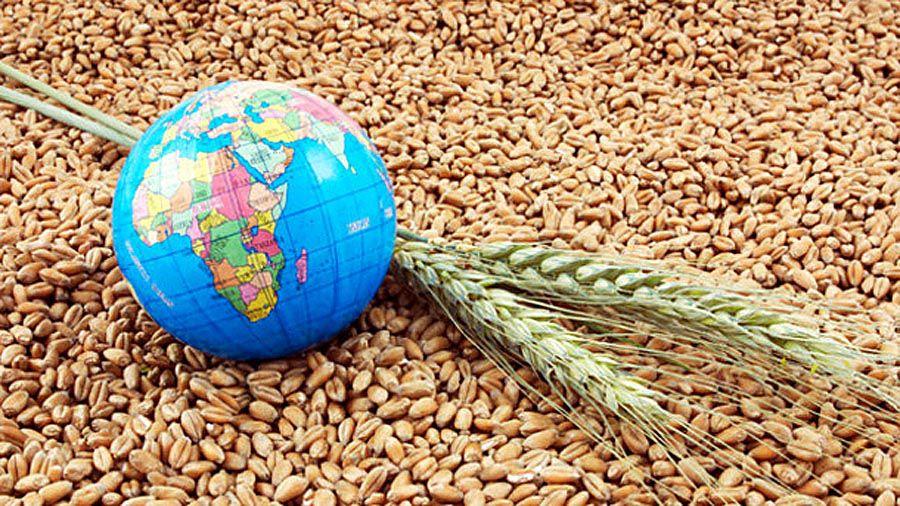 Україна збільшила експорт зернових і зернобобових