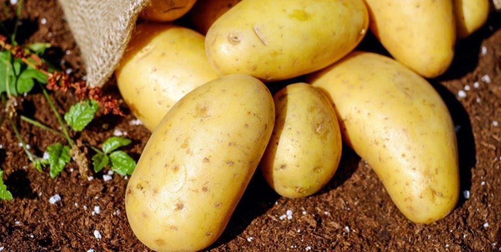 Аграрії Дніпропетровщини збирають врожай
