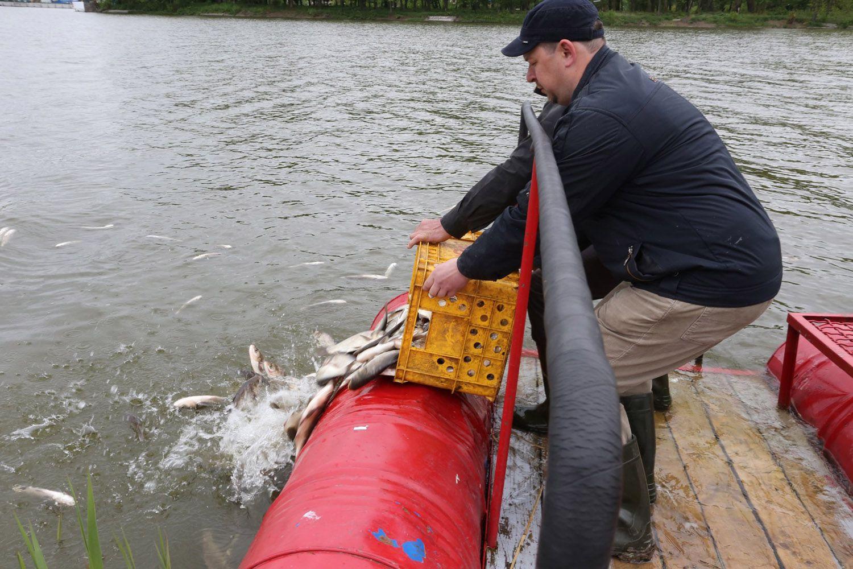 Южный Буг очистит рыба