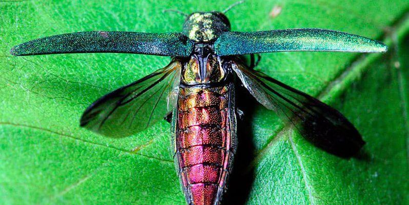 На Луганщині комаха наробила біди