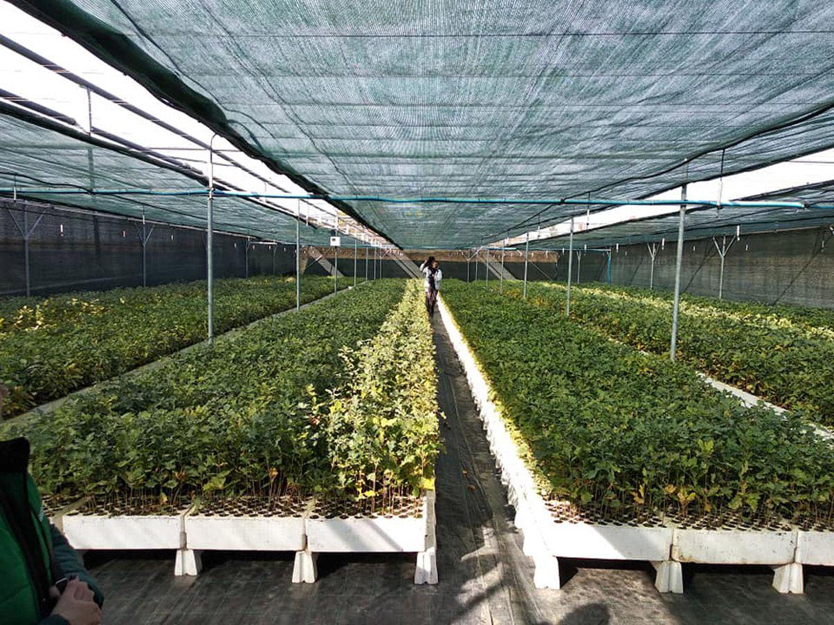 На Тернопільщині вирощують саджанці по-особливому