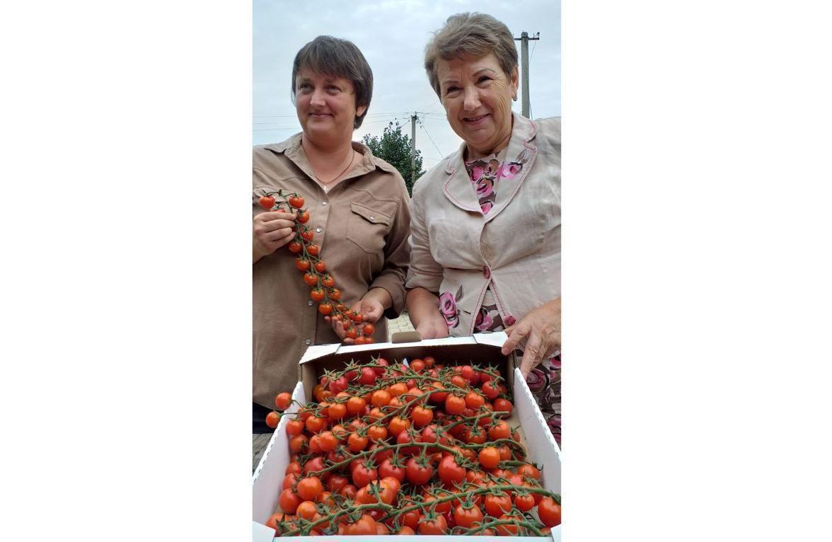 Станица Луганская кормит Киев помидорами
