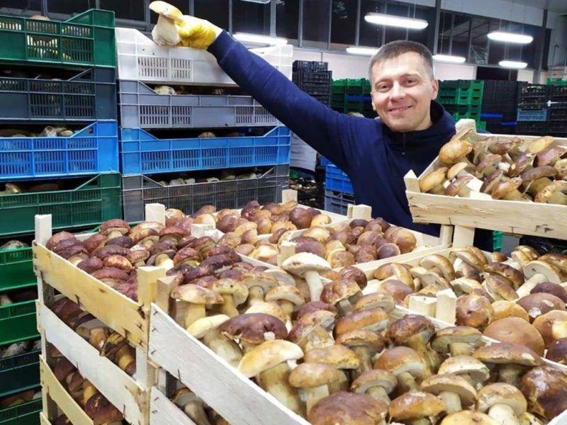 «Дары Гуцульщины» продают лесные грибы в несколько стран