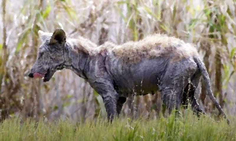 Запорізька область: Чупакаброю виявилася лисиця