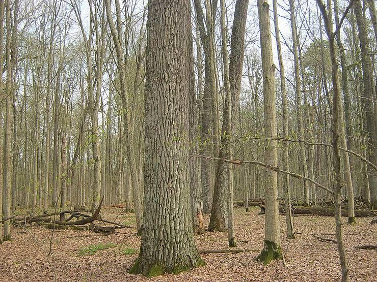 «Раритети» білокоровицького лісу