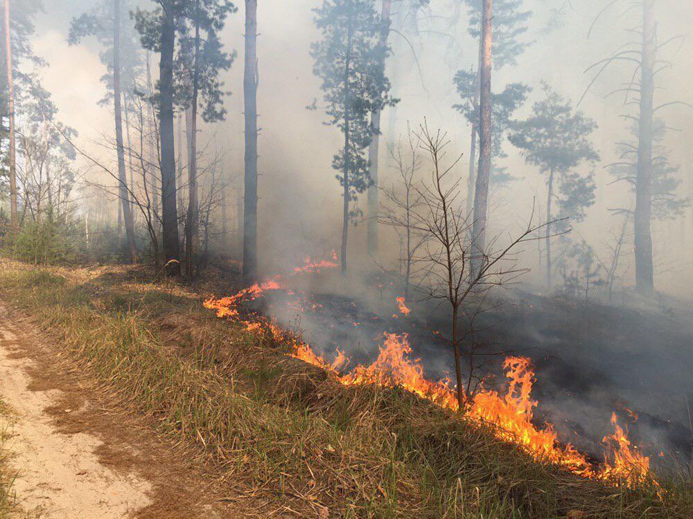 Ліс у Котелевському районі вдалося врятувати