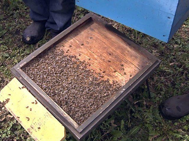 Пришла весна — погибли пчелы