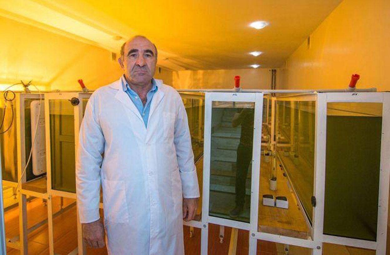 «Аромати» спиртзаводів поглинають водорості