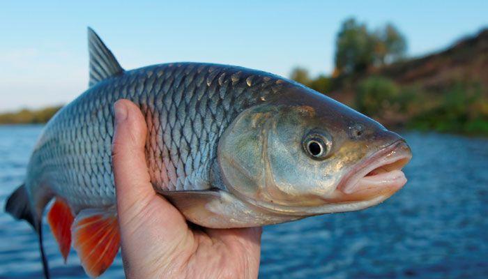 На Херсонщині виловлену браконьєрами рибу рахують тоннами