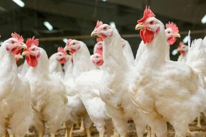 Пташиного грипу на Херсонщині більше немає
