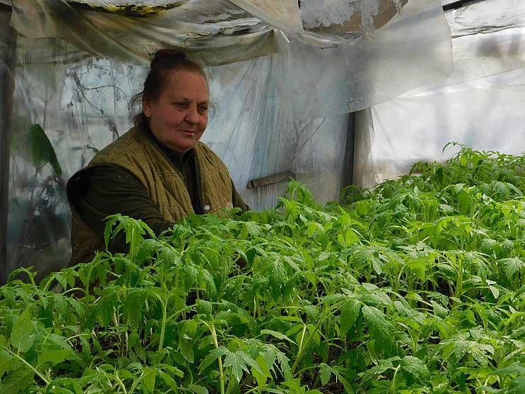 Надія Михайлішина з Острівська ділиться досвідом вирощування помідорів