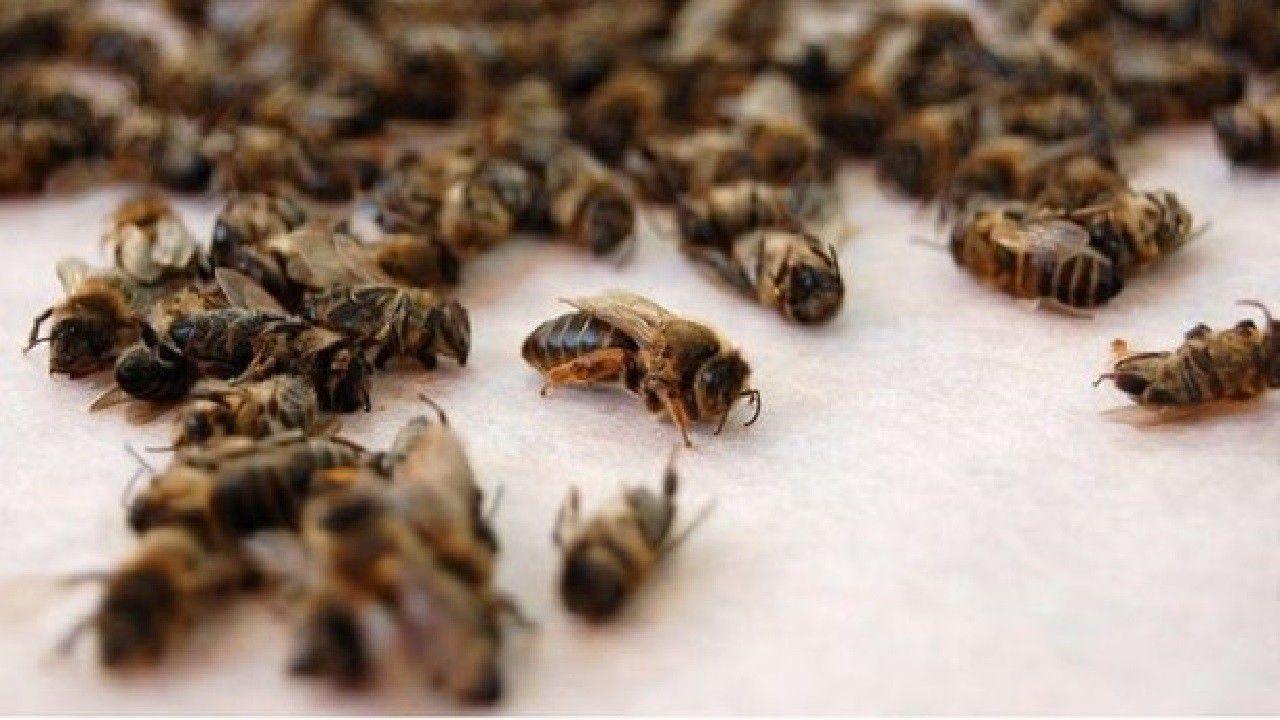 Знову труять бджіл
